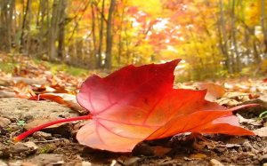 autumn-falling-leaf-2