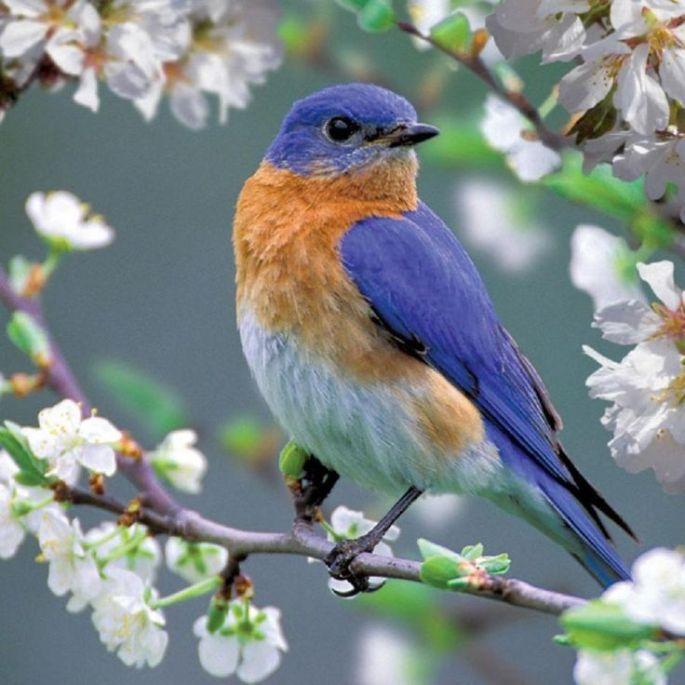 044940339ffd44ad8dada9ef5dd851fd--pretty-birds-beautiful-birds.jpg