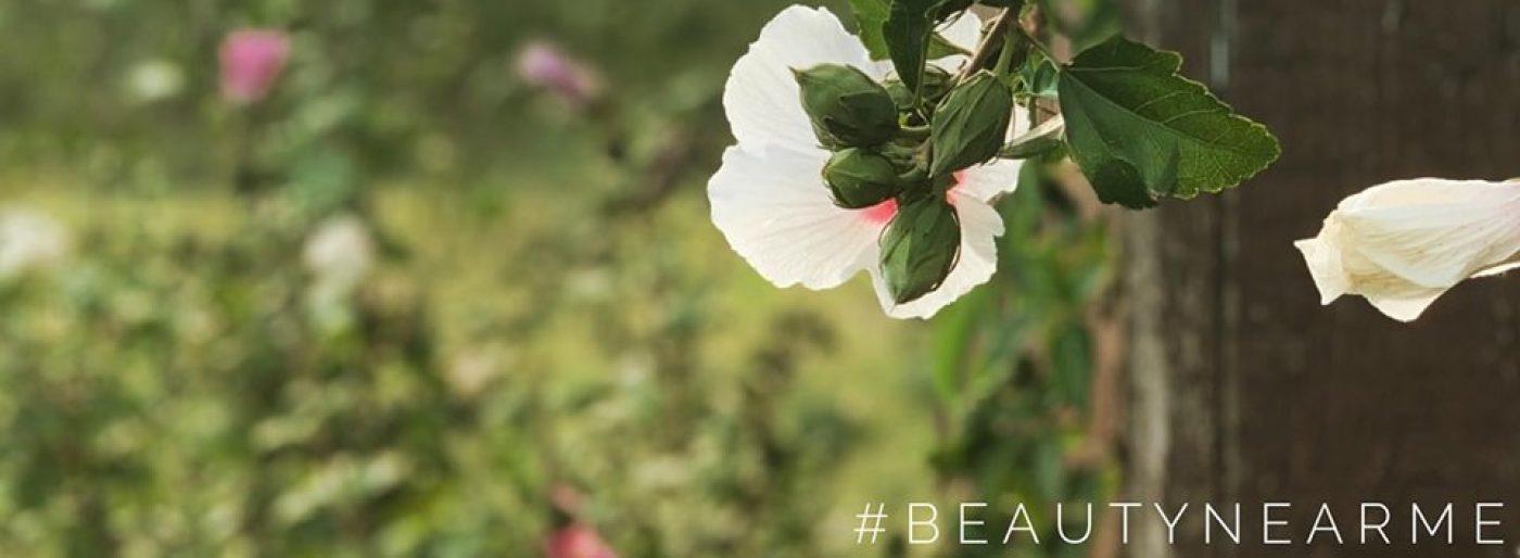 Beauty Near Me
